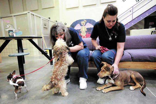 PHOTOS by JESSICA EBELBAR/LAS VEGAS REVIEW-JOURNAl Inmates Jill Rockcastle, left, and Susanne Carno play with dogs near their cells at Florence McClure Women's Correctional Center in Las Veg ...