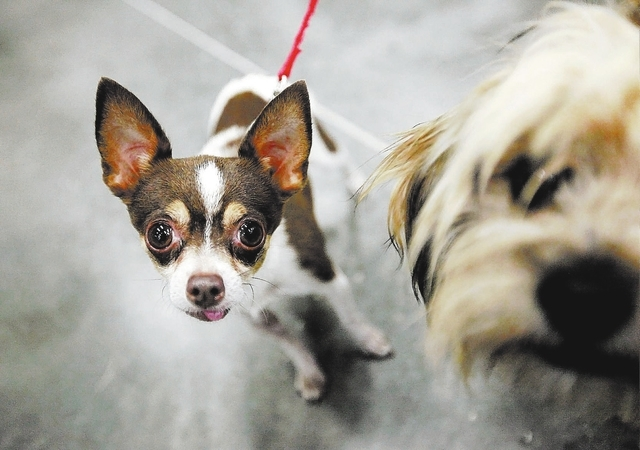 Dogs are seen at the Florence McClure Women's Correctional Center in Las Vegas Monday, July 22, 2013. The dogs live in the facility with inmates as part of the Pups on Parole program, which  ...
