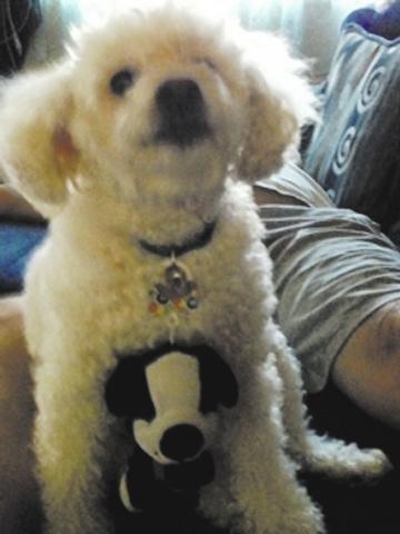 "Las Vegas resident Sharon Hayamizu said, ""Hi, my name is Muffin, and here is my friend Oreo. He hangs around with me."""