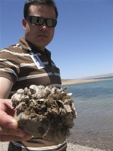 Andrew Munoz, of the Lake Mead National Recreation Area, holds up a rock covered with the invasive quagga mussels at Lake Mead National Recreation Area Monday, July 6, 2009. (AP Photo/Felicia Fonseca)