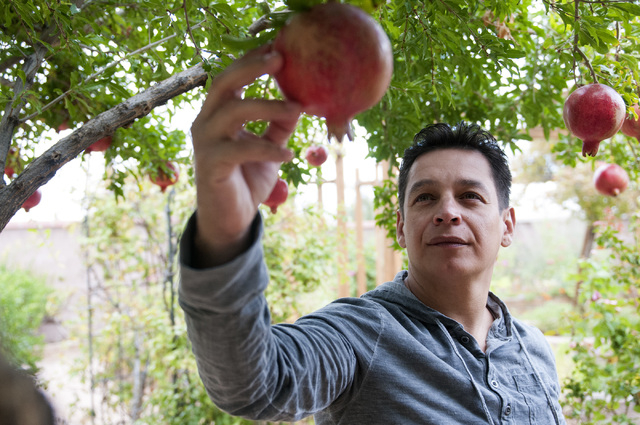Walter Trujillo, a Venezuelan national and legal United States resident, picks fruit from a tree in his backyard in Las Vegas, Nev., Thursday, Oct. 10, 2013. The Nevada Supreme Court ruled against ...