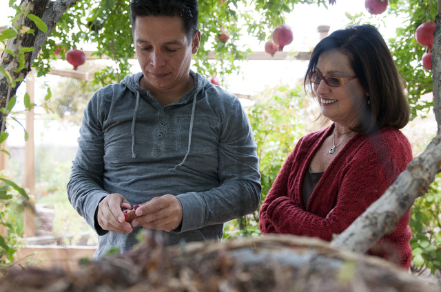 Walter Trujillo, a Venezuelan national and legal United States resident, picks fruit from a tree in his backyard with his partner Christina Cesaretti in Las Vegas, Nev., Thursday, Oct. 10, 2013. T ...