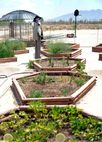 """""""Bruce"""" a scarecrow stands guard over Bryan and Dusty Schoening's coffin-shaped raised vegetable beds at their Pahrump home, Coffinwood. (David Becker/Las Vegas Review-Journal)"""