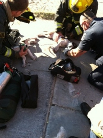 North Las Vegas firefighters give oxygen to puppies that were rescued from a burning building Tuesday morning. The house fire displaced 12 people. (Courtesy North Las Vegas Fire Department)