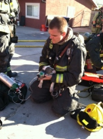 A North Las Vegas firefighter gives oxygen to puppy that was rescued from a burning building Tuesday morning. The house fire displaced 12 people. (Courtesy North Las Vegas Fire Department)