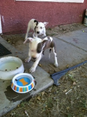 These puppies were rescued from a burning building Tuesday morning. The house fire displaced 12 people. (Courtesy North Las Vegas Fire Department)