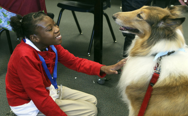 Anaisha Franklin pets Rosie, a rough-coat Collie, during a canine therapy class with K9 Therapists of Las Vegas at Bailey Middle School, 2500 N. Hollywood Blvd., Sept. 24.  (Jerry Henkel/View)