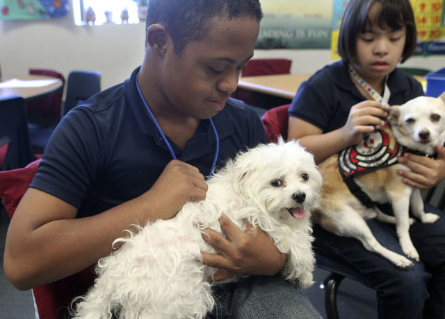 Messiah Andrus-Degrate pets Sam, a rescue Maltese, during a canine therapy class at Bailey Middle School, Sept. 24. Behind them, Ashley Abrica-Figueroa holds Little Harley the Chihuahua. (Jerry He ...