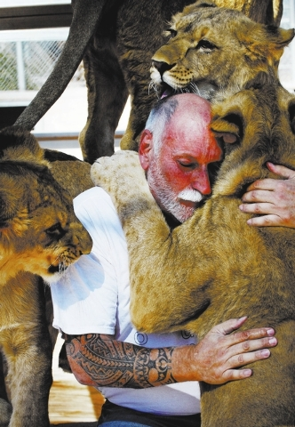 Owner and animal trainer Keith Evans interacts with 11 month old lions at the Lion Habitat Ranch in Henderson on Oct. 15, 2013. (Jason Bean/Las Vegas Review-Journal)