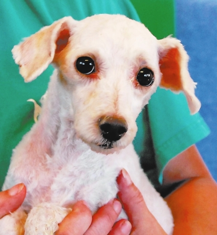 Felicia Nevada SPCA Despair is fading, and my hopes are building. If you welcome me into your loving, forever home I will bless you with all of the unconditional devotion in my heart. My name is F ...