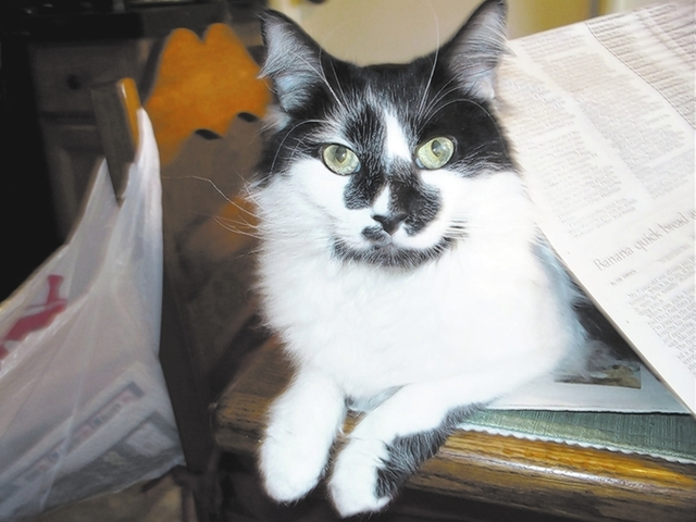 """Las Vegas residents Jill and Lee Tubb said, """"This is Legend, who we adopted from Heaven Can Wait. He loves his morning pets, so he interrupts my newspaper reading by lying under the paper. He wa ..."""