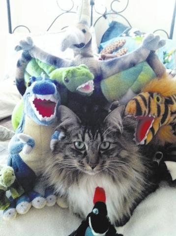 """The Jones family of Summerlin shared this photo. """"My son Sebastian Jones is the proud owner and 'partner in crime' with this beautiful cat named Nine. As you can see, he loves dinosaurs, too!"""""""