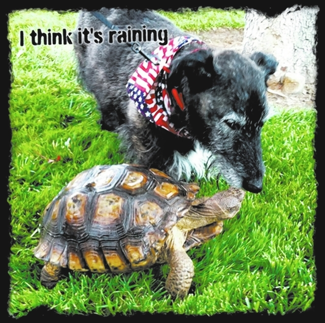 """Summerlin resident Sheryl Righellis said, """"This is our 16-year-old mixed-breed dog Shank with his best friend Herman. Herman belongs to one of our neighbors. We were visiting and got caught in o ..."""