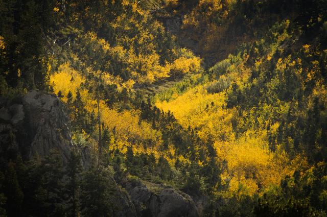 Aspens as seen above Mount Charleston Lodge on Monday, Sept. 16. (Jeff Scheid/Las Vegas Review-Journal)