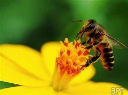 Creating a pollinator-friendly habitat in your backyard
