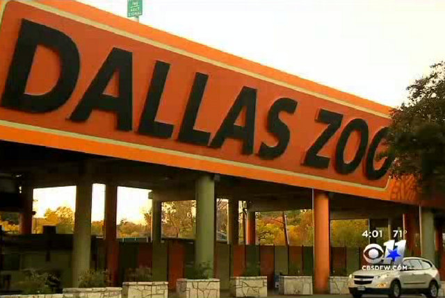 Dallas Zoo Officials Puzzled About Lion Attack