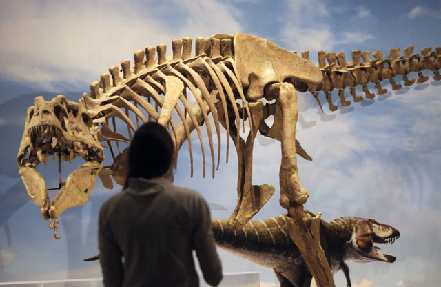 A new species of tyrannosaur unearthed in Grand Staircase-Escalante National Monument in southern Utah is revealed at the Utah Museum of Natural History Museum in Salt Lake City, Wednesday, Nov. 6 ...