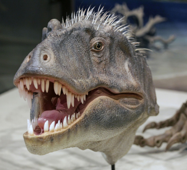 Realistic model derived from actual skull bones of a new species of tyrannosaur unearthed in Grand Staircase-Escalante National Monument in southern Utah is revealed at the Utah Museum of Natural  ...