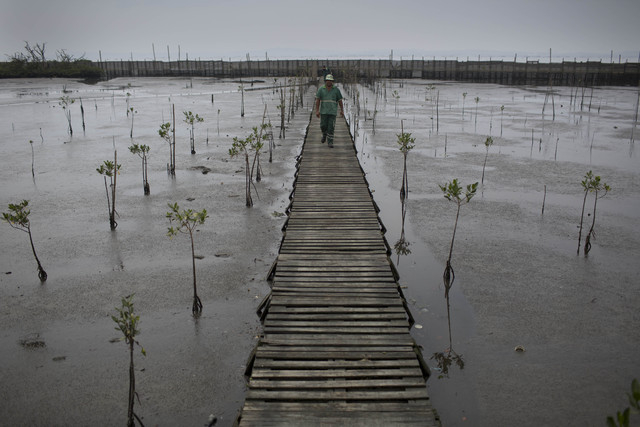In this Oct. 23, 2013 photo, a man works on the reforestation of mangrove forests along Guanabara Bay in Rio de Janeiro, Brazil. Rios Olympic committee has pledged in writing that the pollution pr ...