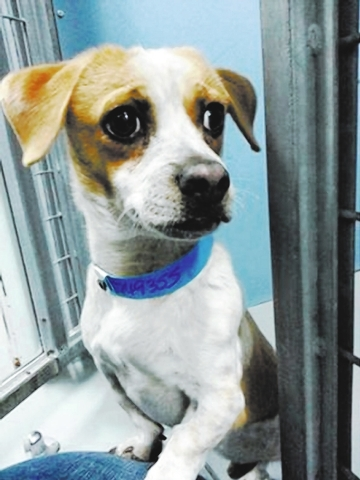 Low Rider The Animal Foundation My name is Low Rider (I.D. No. A749355), and I'm a 1-year-old male dachshund. I've been cruising around the shelter looking for a family. I'm a mellow pup who ...