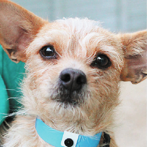 skippy The Animal Foundation My name's Skippy (I.D. No. A744518), and I'm a 3-year-old male terrier. I'm a little bit shy when I'm introduced to new people, but with a little sweet talk, I ...