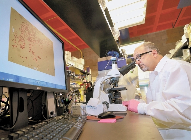 Dr. Ernesto Abel-Santos works in his lab on the UNLV campus at 4505 S. Maryland Parkway in Las Vegas on Friday, Nov. 8, 2013. (Bill Hughes/Las Vegas Review-Journal)