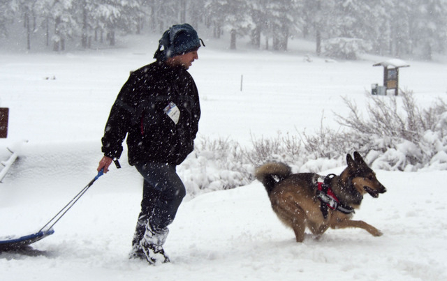 Richard Legrain, of Las Vegas, plays with his dog Hachi at Lee Canyon Snow Play area on Mt. Charleston, Friday, Nov. 22, 2013. The Nevada Highway Patrol is requiring chains or four-wheel drive wit ...