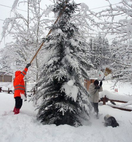 Ron, left, and Liz Claggett clear snow off their evergreen tree in Kyle Canyon's Old Town on Mt. Charleston, Friday, Nov. 22, 2013. Their dog Panda plays in the snow next to them. The Claggetts we ...