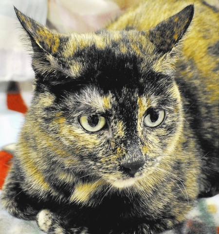 Mimi Happy Home Animal Sanctuary My name is Mimi, and I'm a 1-year-old tortoiseshell kitty. I am loving and sweet and will greet you when you come home. I enjoy all you humans, and I crave lots  ...