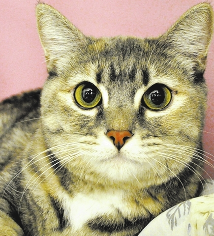 Tilly Happy Home Animal Sanctuary My name is Tilly, and I'm as sweet as can be from the tip of my orange nose to the white tip of my tail. I am a  beautiful 2-year-old dilute tortie. If you will ...