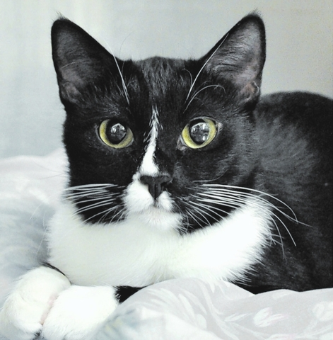 Lily Happy Home Animal Sanctuary My name is Lily, and I am a black and white adorable 1-year-old. I'm very energetic and love to play. I'm a petite and sweet little girl. My babies found their ...