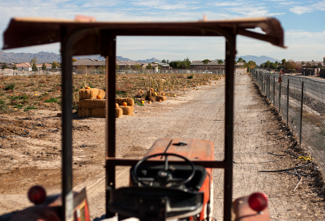 Houses are visible beyond Gilcrease Orchard, located at 7800 N. Tenaya Way on Tuesday, Nov. 12, 2013. (Samantha Clemens/Las Vegas Review-Journal)