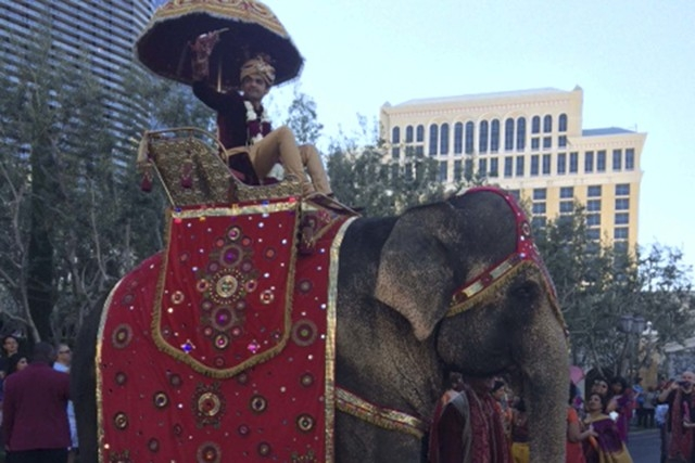 An elephant was the star attraction during a wedding celebration at the Bellagio on Saturday. (Courtesy/Katie Fowler)