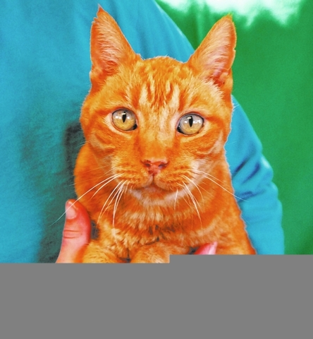 Mumford Nevada SPCA How did a noble 15-year-old like me end up homeless, despite a lifetime of love and loyalty? My name is Mumford, and I am an orange tabby, good with cats, a neutered boy who as ...