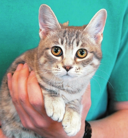 Patty Nevada SPCA Hold me in your arms, and I will place my head on your shoulder and purr contentedly. If you adopt me, please make sure that you will commit to me for life. My name is Patty, and ...