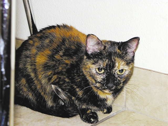 Gypsy Paws 4 Love Gypsy is a 5-year-old female tortoiseshell. This quiet girl's mom died, and it has been difficult for her to understand. Gypsy does well with cats and dogs and just needs a cha ...