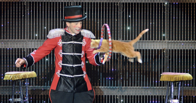 """Gregory Popovich performs with one of his feline co-stars during the """"Popovich Comedy Pet Theater"""" show in the V Theater at the Miracle Mile Shops in the Planet Hollywood hotel-casino at ..."""