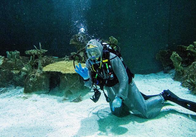 "Aquarium general curator Jack Jewell gives the ""OK"" sign while diving in the Neptune's Fury aquarium at the Shark Reef aquarium in the Mandalay Bay hotel-casino in Las Vegas, Tuesday, Nov. 5, 2013 ..."
