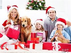 Holiday dog grooming 101: How to get your pet ready for the party