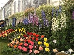 For gardeners and lovers of flowers, London in May is the place to be