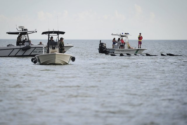 Park Rangers and Law Enforcement patrol the waters to ensure safe passage for a pod of pilot whales, Wednesday, Dec. 4, 2013 at Highland Beach in The Everglades of Florida. Six dead pilot whales w ...
