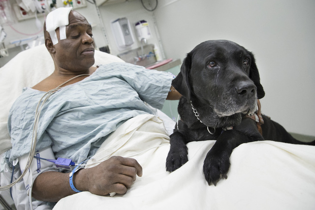 Cecil Williams pets his guide dog Orlando in his hospital bed following a fall onto subway tracks from the platform at 145th Street, Tuesday, Dec. 17, 2013, in New York. Williams, 61 and blind, sa ...