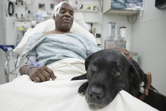 Cecil Williams pets his guide dog Orlando in his hospital bed following a fall onto subway tracks from the platform, Tuesday, Dec. 17, 2013, in New York. The blind 61-year-old Williams says he fai ...