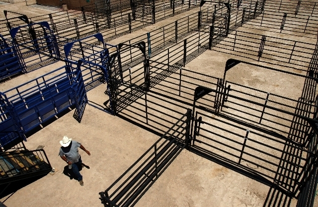Lizzard Griffith walks around fencing for a rodeo arena Friday in downtown Las Vegas used for Helldorado Days. (Review-Journal/File)
