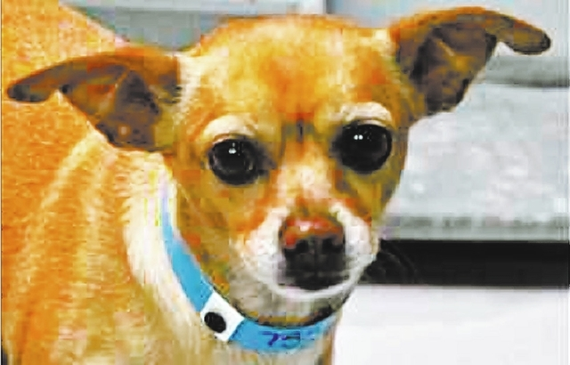 buddy The Animal Foundation My name is Buddy (I.D. No. A733896), and I'm a 5-year-old neutered male Chihuahua. I've been searching for the perfect family with which to spend my life. Maybe you ...