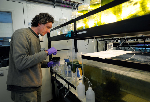 Olin Feuerbacher, aquaculturist at the Ash Meadows Fish Conservation Facility, collects the special food that is fed to the newly hatched Devil's Hole pupfish on Nov. 25, 2013. A team of from the  ...