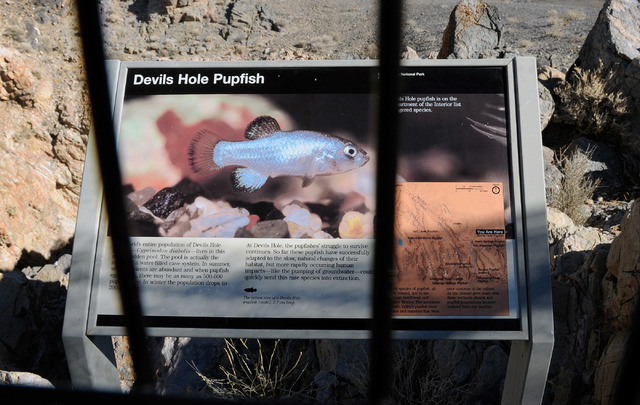 An information sign for the Devil's Hole pupfish is posted near the overlook to the fishes's habitat located about 90 miles west of Las Vegas on Nov. 25, 2013. (David Becker/Las Vegas Review-Journal)