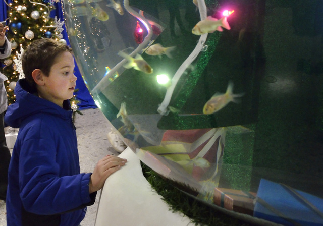 Parker Hove looks at a giant snow globe stocked with fish at the Henderson Convention Center during WinterFest in the Water Street District in Henderson on Saturday, Dec. 14, 2013. The 300-gallon  ...