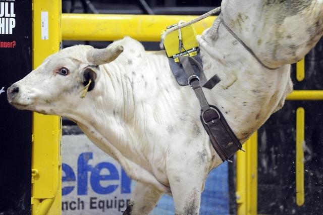 The bull named JJ's Dream bucks to a score of 81.8 during the Exclusive Genetics Million Dollar Bucking Bull Championship at Mandalay Bay in Las Vegas Friday, Dec. 13, 2013. (Josh Holmberg/Las Veg ...