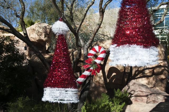 Christmas decorations hang from trees at Springs Preserve. (Erik Verduzco/Las Vegas Review-Journal)